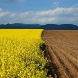 Цены на аренду земли в Украине и мире: Всемирный банк поставил диагноз