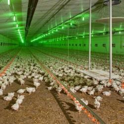 «Покупатели птицефабрики Бахматюка просто оттягивают время, чтобы сохранить предприятие», — эксперт