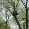 В США ограбивший банк вор четыре часа просидел на дереве