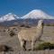 В Чили обязали платить налоги с криптовалютных доходов