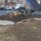 В Одессе банк начал строится на клумбе без ведома жильцов, - ФОТО