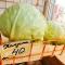 7 причин, почему отечественные овощи стоят дороже импортных фруктов