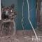 Взрыв в отделении банка в Киеве: появились подробности и новые фото ЧП