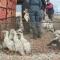Киевскую птицефабрику Бахматюка не продали: победитель аукциона не заплатил