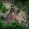 Всемирный банк выдаст Бразилии кредит на спасение тропических лесов
